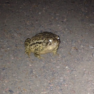 May 30: Demon toad is unimpressed.