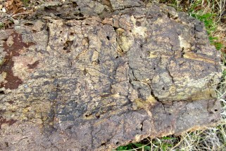 Fossilized swamp.