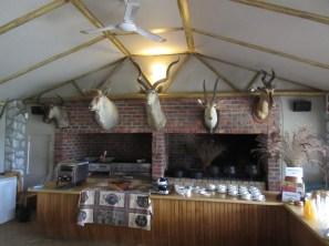 Ungulates at Buffelsfontein.