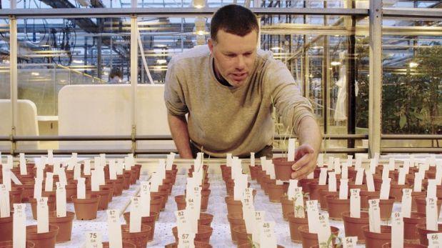 Cultivan alimentos en un suelo similar al de Marte