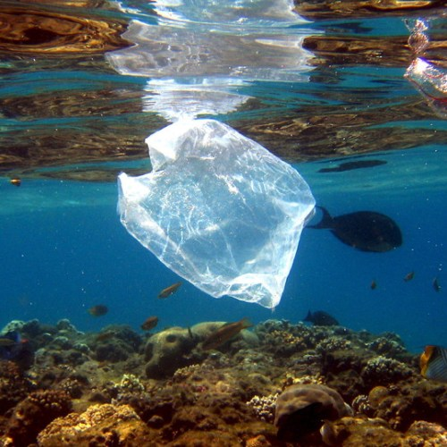 WWF publishes report on the extent of plastic pollution in the Mediterranean