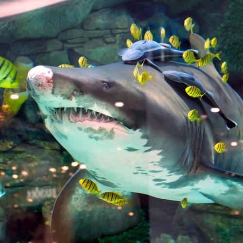 Woman killed by three sharks in Bahamas