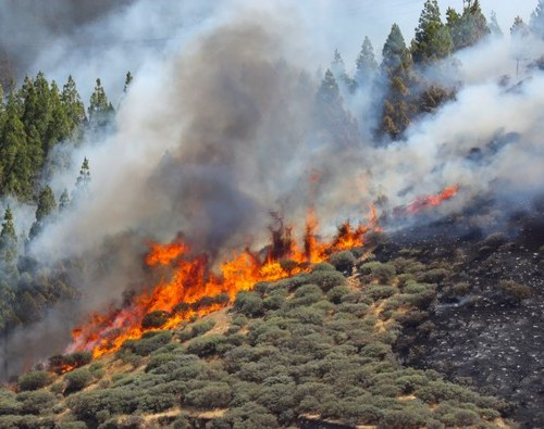 Hundreds evacuated as fire rages on holiday island of Gran Canaria