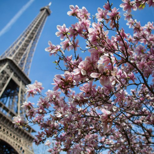 €72-million project in Paris to make it greener and cooler