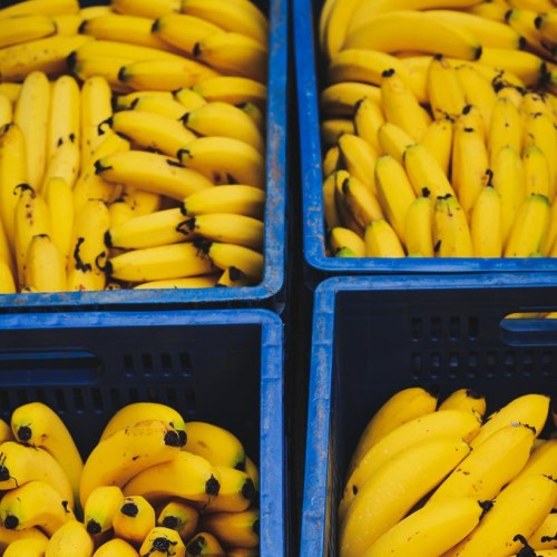 Efforts redoubled to protect banana crops from disease threat