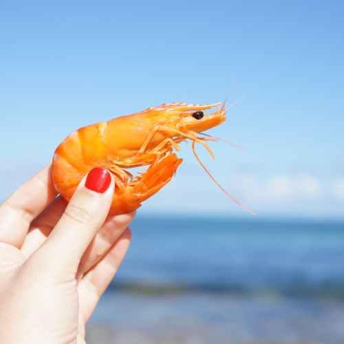 Coronavirus found on Ecuador shrimps in China