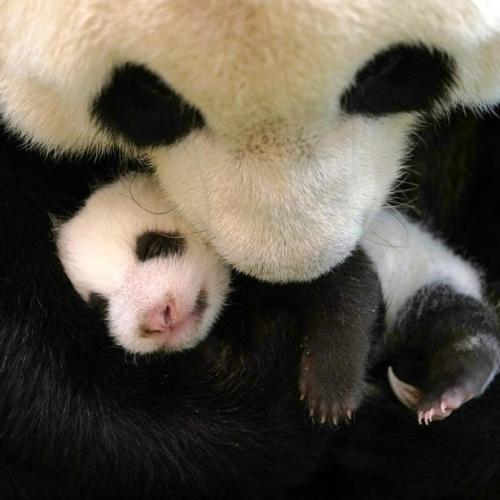 Photo Story:  Baby Rou Rou at Taipei Zoo