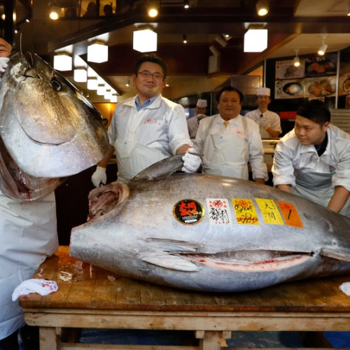 Japan's tuna market, the world's largest, hit hard by coronavirus pandemic