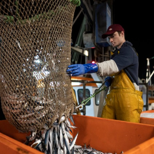 EU sources say Britain has moved to break fisheries deadlock in Brexit trade talks