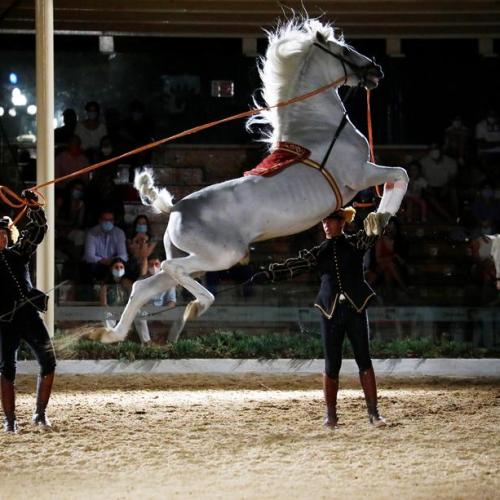 Photo Story: Cordoba Royal Stables reopen after COVID-19