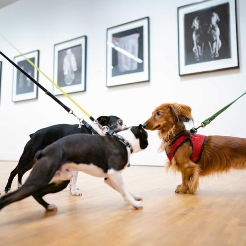 Photo Story: Pet animals allowed museum visit on Animal Day