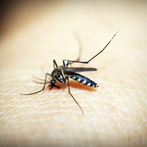 New health headache in the Netherlands as first West Nile virus infection confirmed