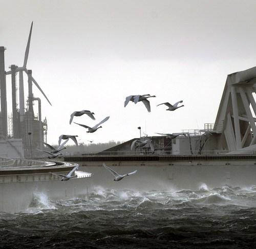 Netherlands confirms cases of H5N8 bird flu in wild swans
