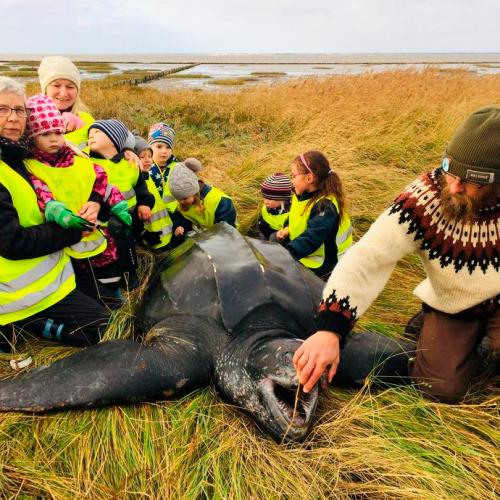 Photo Story: Giant turtle found dead on the beach in Denmark