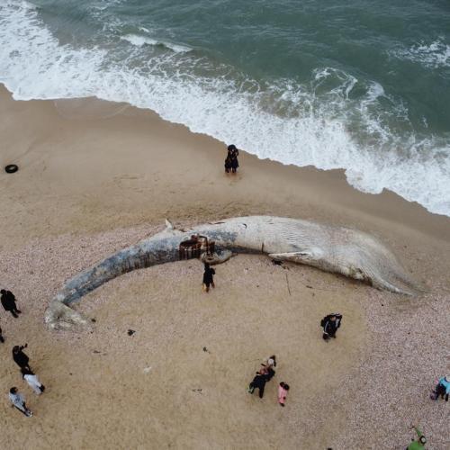 Israeli beaches hit by mystery oil spill