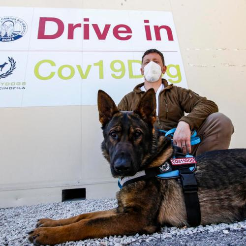 Photo Story: Dogs in Italy trained to recognize Covid-19