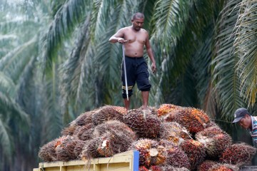 WTO accepts Malaysia's request to examine EU palm oil rules