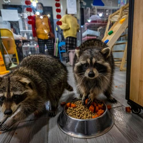 Photo Story – China's booming animal cafes