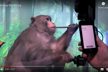 Elon Musk's Neuralink shows monkey with brain-chip playing videogame by thinking