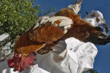 Bulgaria reports bird flu outbreak at industrial farm