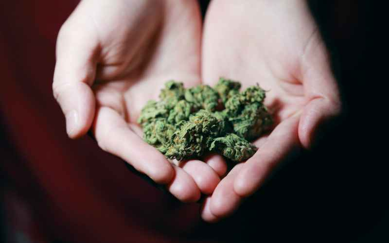 Family Therapists express concern on proposed cannabis reform