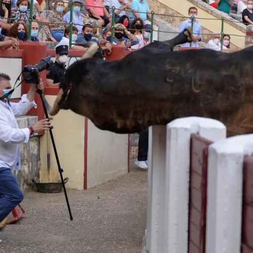 Photo Story: Bull tries to jump off the fence in Valladolid
