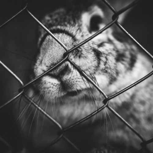 Caged rabbits and budgies may be outlawed in Netherlands