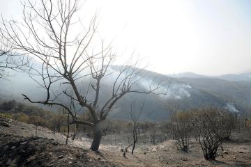 Algerian villagers grapples with wildfire aftermath
