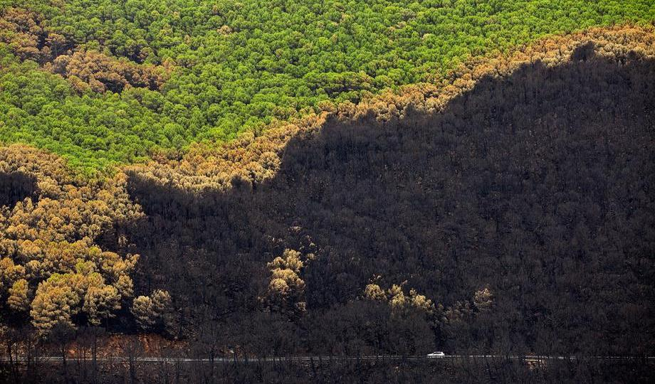 Photo Story – More than 9,500 hectares burnt in southern Spain forest fire