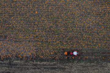 EPA's Eye In The Sky: Thorsbjerggaard pumpkin farm in Skaelskoer, Denmark
