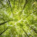 One taxonomy to rule them all?Investorsface myriad ofgreeninvesting rules