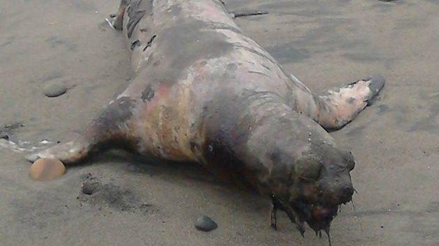 Murieron en la orilla. (Alan Benites)