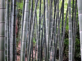 Bamboo stand, Western China