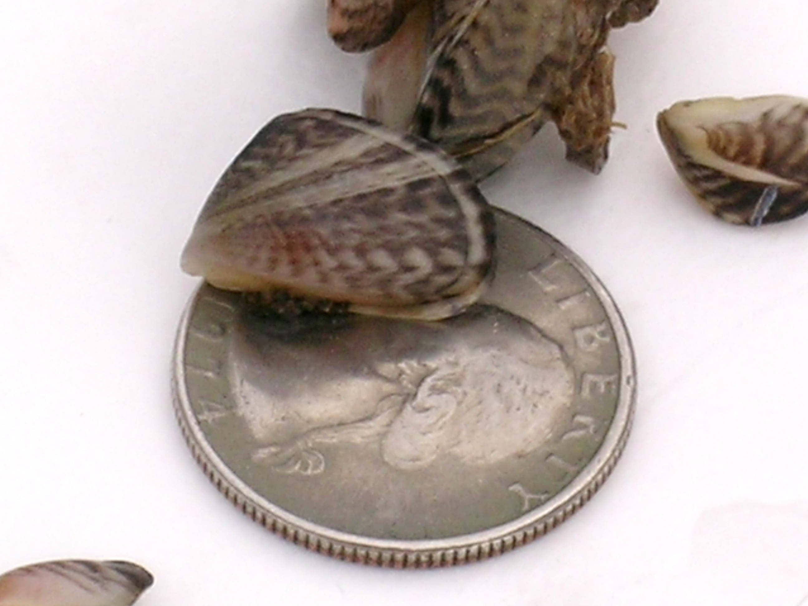 Boaters Can Help Combat Spread Of Invasive Quagga And