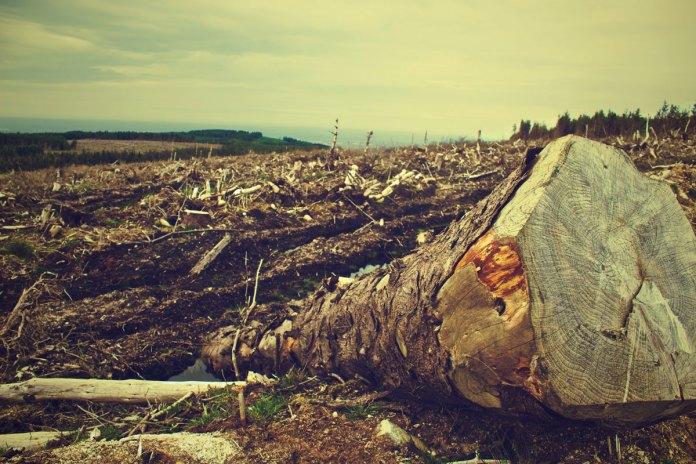 ecocidio crime ambiental