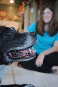 woman-makes-21-hour-trip-to-return-stranded-dog