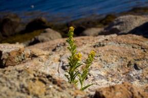 A flower amidst rocks