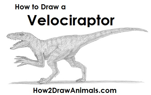 How To Draw A Velociraptor Video Step By Step Pictures