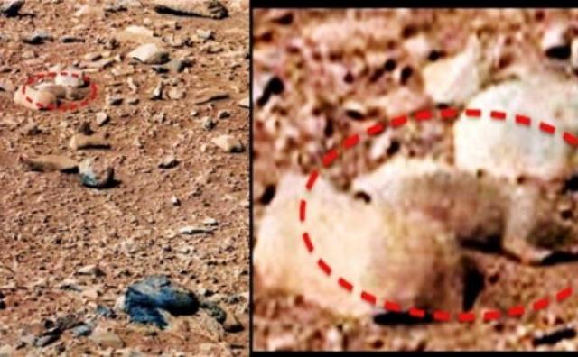 Berikut Ini 4 'Hewan' Penunggu Mars - Tribun Manado