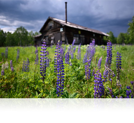 Landscape photo of purple flowers in greenery with a house in the background shot using the AF-S NIKKOR 20mm f/1.8G ED lens