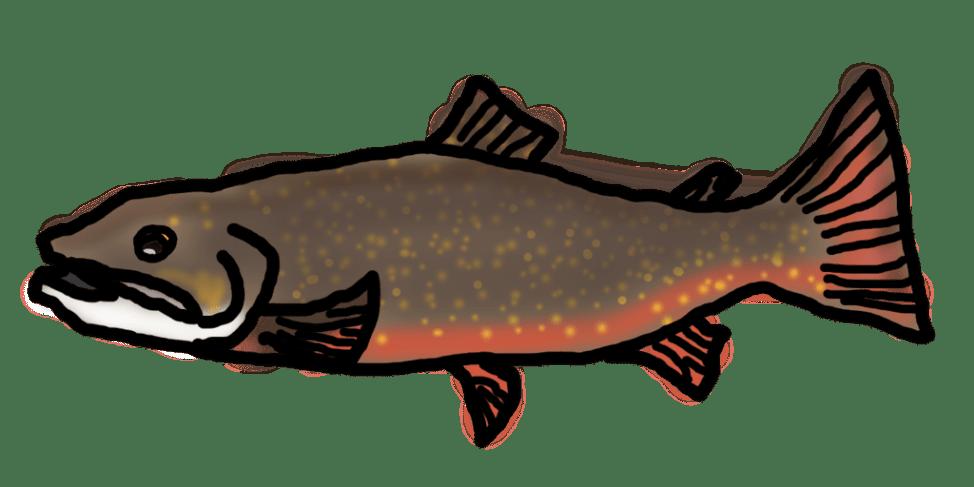 【トラウト】管理釣り場用初心者おすすめラインの選び方・注意点