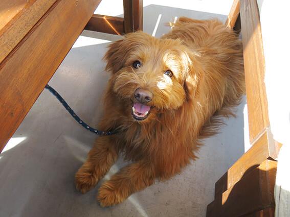 元保護犬 ブログ