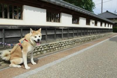 f:id:haro33takoshi:20171030144518j:plain