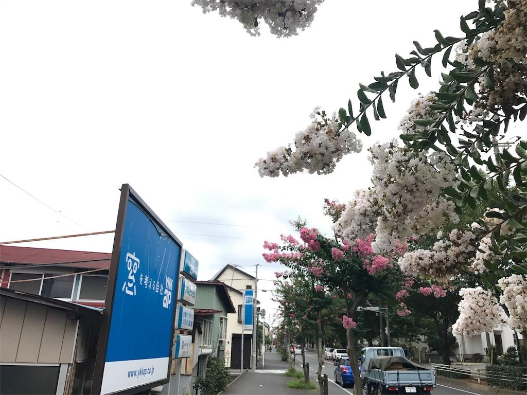 f:id:mika-shimosawa:20170802224119j:image