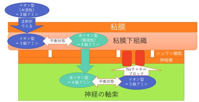 局所麻酔薬の作用機序