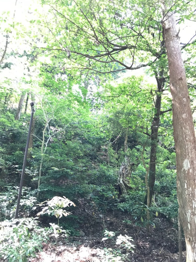 お伊勢さんの森を歩く