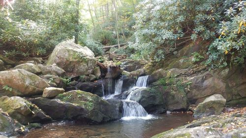 The grotto and surrounding area are beautiful but the crowds of visitors detract from the experience. Grotto Falls Trail Tennessee Alltrails