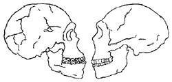 Human specimens