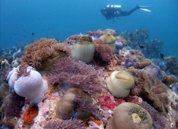 Coral reefs get sick from plastic waste - study