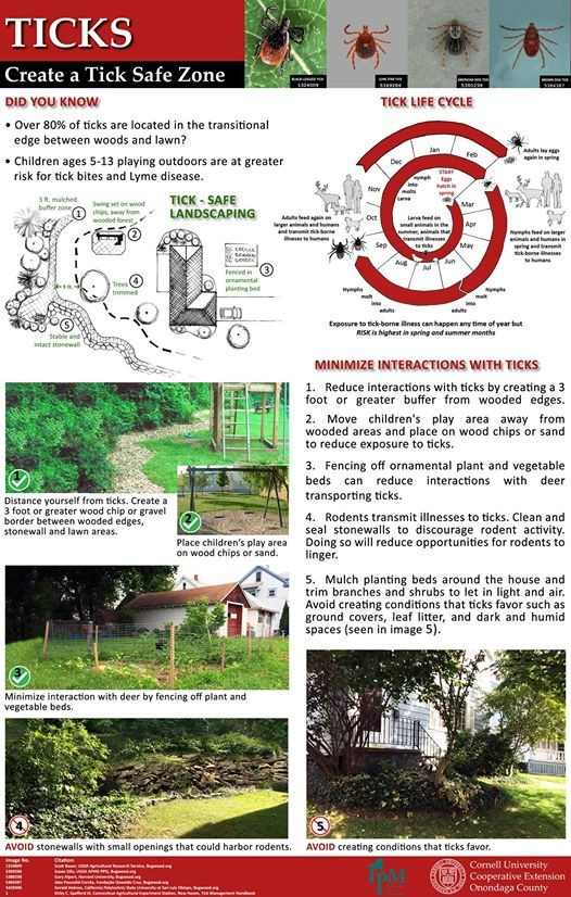 ticks new york state integrated pest management - 526×826
